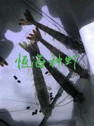 1554603866352_看图王