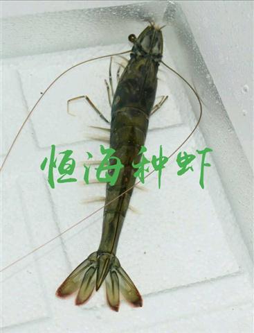 1554603975963_看图王